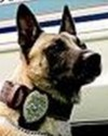 K9 Ralph | North Lauderdale Police Department, Florida