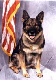 K9 Ivan | Sacramento Police Department, California