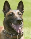 K9 R.J. | Phoenix Police Department, Arizona