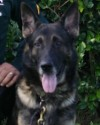 K9 Diogi | Polk County Sheriff's Office, Florida