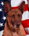 K9 Kilo | Anderson Police Department, Indiana