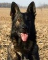 K9 Zak | Mercer County Sheriff's Office, Ohio