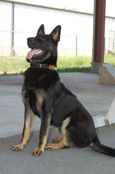 K9 Creed | Panama Police Department, Oklahoma