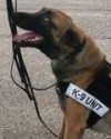 K9 Magnum   Anderson Police Department, Indiana