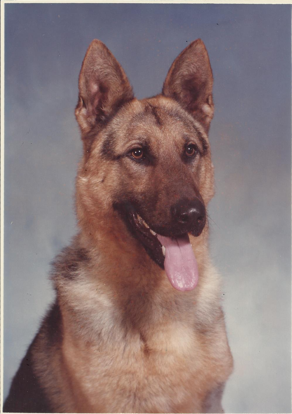 K9 Ingo | Metro Nashville Police Department, Tennessee