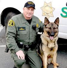 K9 Morgan | Mendocino County Sheriff's Office, California