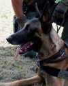 K9 Nash | United States Department of Justice - Bureau of Alcohol, Tobacco, Firearms and Explosives, U.S. Government