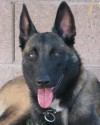 K9 Ivan | Tucson Police Department, Arizona
