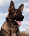 K9 Ape | United States Department of Justice - Federal Bureau of Investigation, U.S. Government