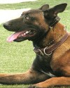 K9 Ronin | Glendale Police Department, Arizona