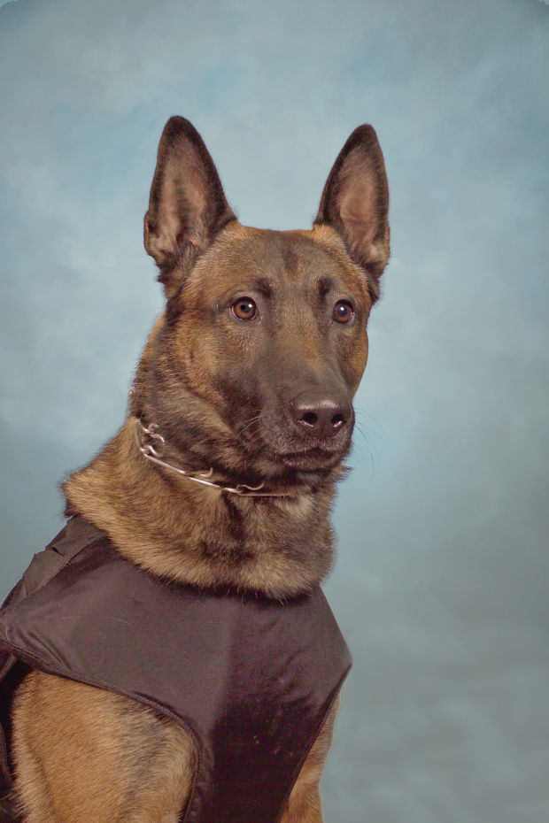 K9 Draco | Pontiac Police Department, Illinois
