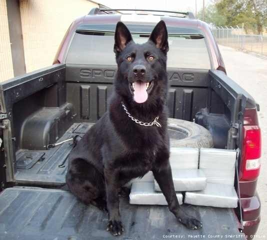 K9 Knight | Fayette County Sheriff's Office, Texas