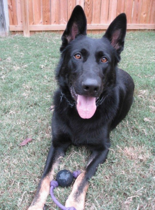 K9 Titus | Little Rock Police Department, Arkansas