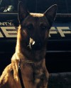 K9 Wix | Brown County Sheriff's Office, Wisconsin