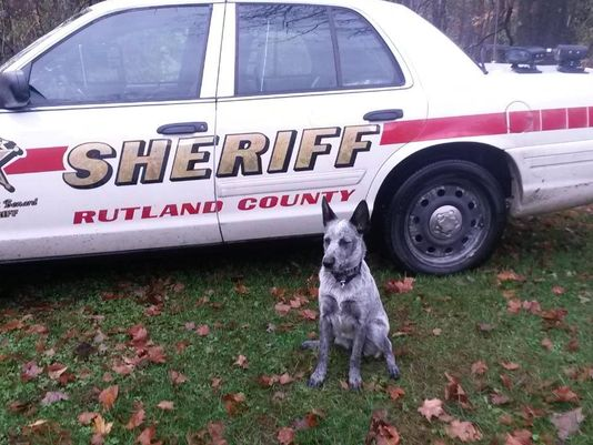 K9 Betcha | Rutland County Sheriff's Office, Vermont