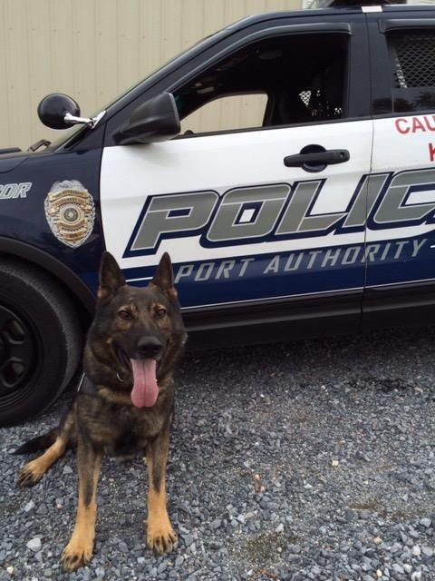 K9 Aren | Port Authority of Allegheny County Police Department, Pennsylvania