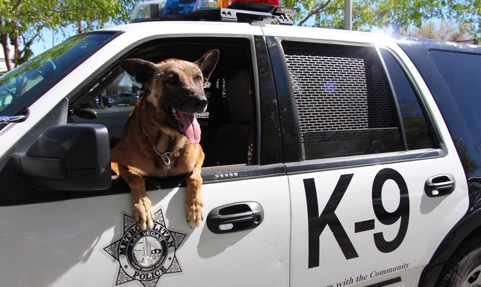 K9 Nicky   Las Vegas Metropolitan Police Department, Nevada