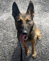 K9 Doki | Jasper County Sheriff's Office, South Carolina