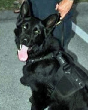K9 Diesel | Sebastian Police Department, Florida