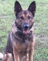 K9 Aron | Lauderdale County Sheriff's Department, Mississippi