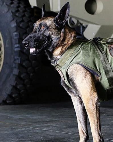 K9 Dingo | Unified Police Department of Greater Salt Lake, Utah