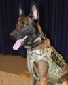 K9 Will | New York State Police, New York