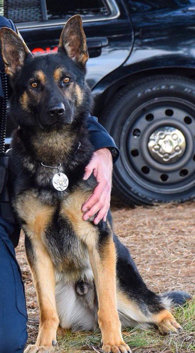K9 Jax | Sunnyvale Department of Public Safety, California