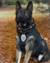 K9 Choper | Conewango Township Police Department, Pennsylvania