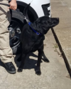 K9 Smokey | Nowata Police Department, Oklahoma