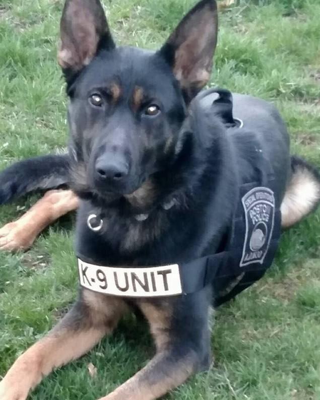 K9 Rush | Boston Police Department, Massachusetts