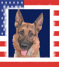 K9 Marko | Los Angeles Police Department, California