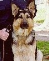 K9 Kai | Bannock County Sheriff's Department, Idaho