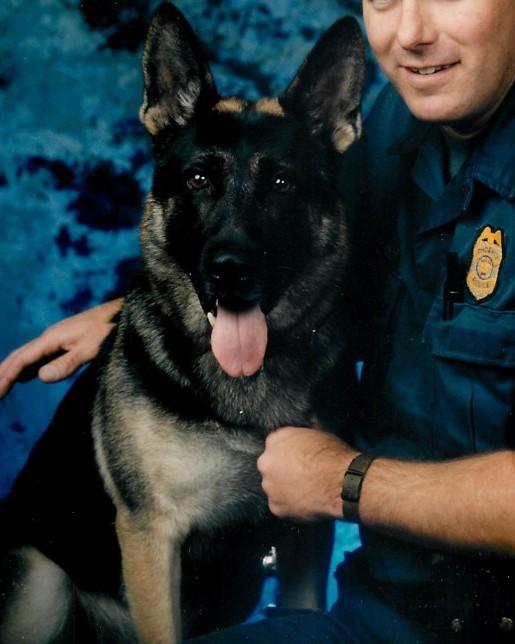 K9 Hunter | Phoenix Police Department, Arizona