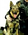 K9 Faro | Norfolk Police Department, Virginia
