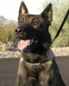 K9 Leon | Mesa Police Department, Arizona