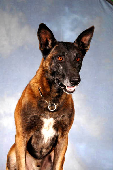 K9 Rico | Arizona Department of Public Safety, Arizona