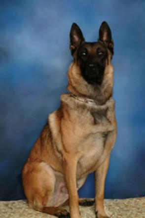 K9 Carsen | Giles County Sheriff's Office, Virginia