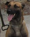 K9 Freddy   United States Department of Justice - Federal Bureau of Investigation, U.S. Government