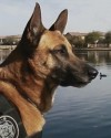 K9 Jeg | Arizona Department of Public Safety, Arizona
