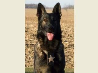 K9 Zak | Mercer County Sheriff's Office, Ohio