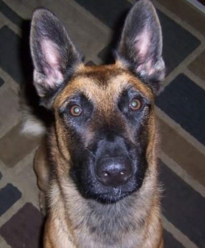 K9 Hector | Lafayette Parish Sheriff's Office, Louisiana