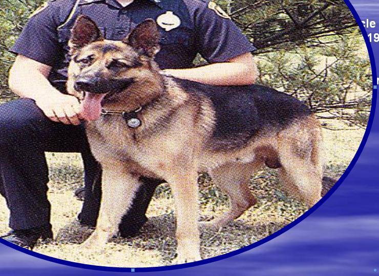 K9 Jupp | Pittsburgh Bureau of Police, Pennsylvania