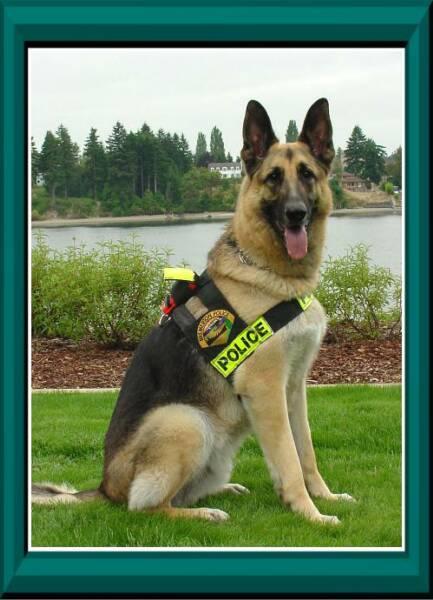 K9 Buddy | Bremerton Police Department, Washington