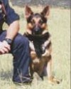 K9 Ando | LaGrange Police Department, Georgia