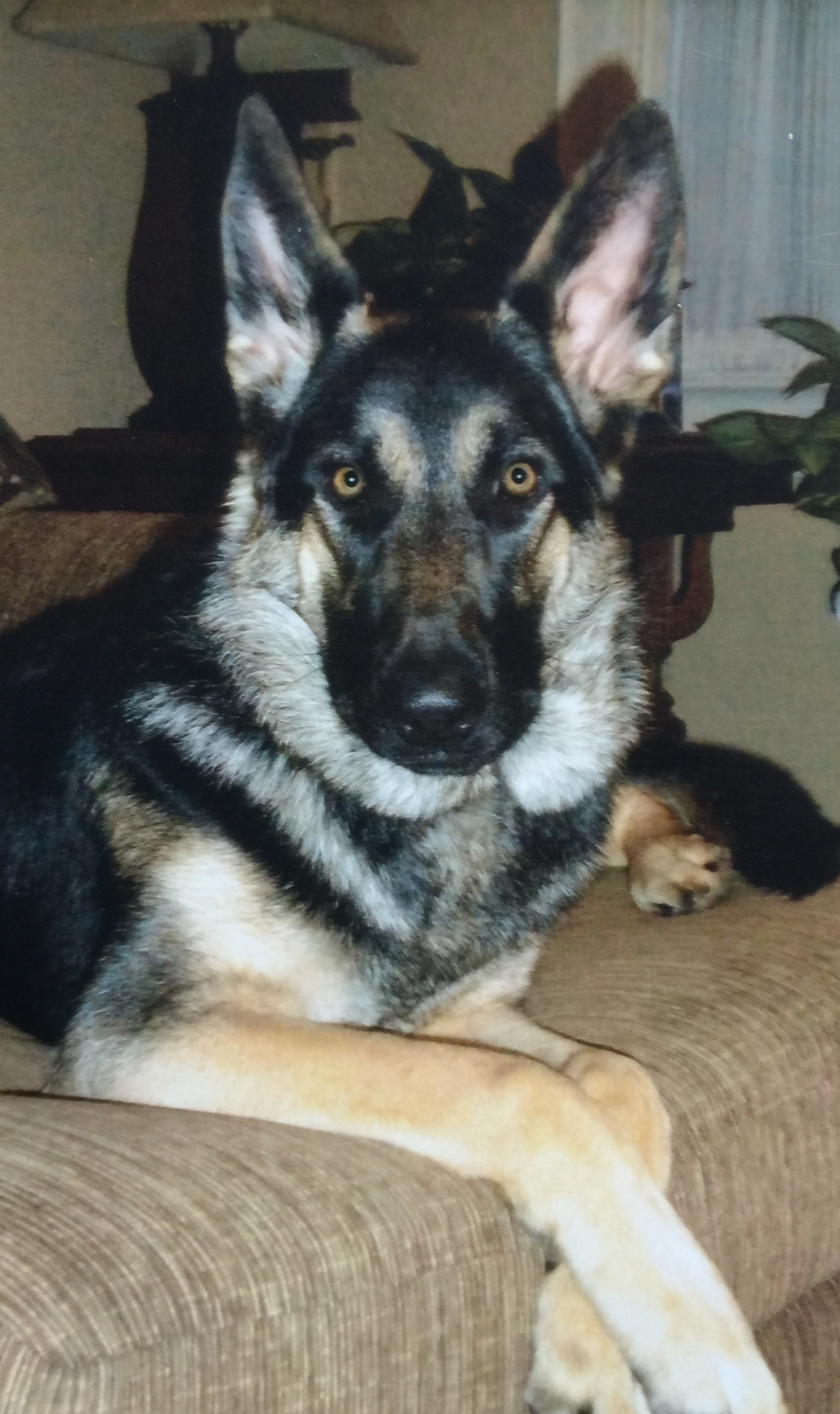 K9 Ando | Marion County Sheriff's Office, Indiana
