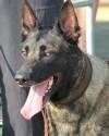 K9 Fargo | Richland County Sheriff's Department, South Carolina