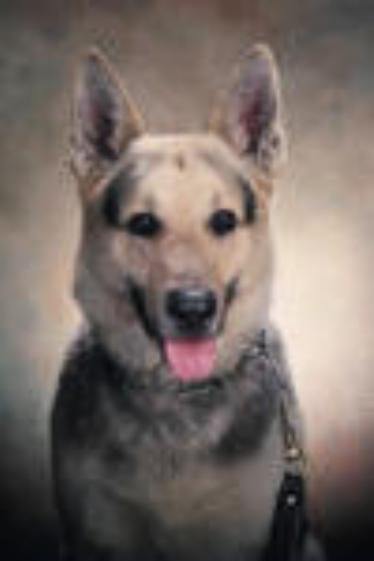 K9 Tramp | Plymouth Township Police Department, Pennsylvania