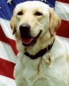 K9 L.E.   United States Department of Justice - Bureau of Alcohol, Tobacco, Firearms and Explosives, U.S. Government