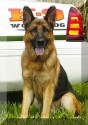 K9 Vasko | St. Lucie County Sheriff's Office, Florida