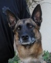 K9 Mattie | California Department of Corrections and Rehabilitation, California